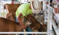 4-H – Farming at the Fair